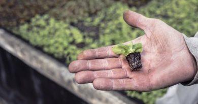 Grignotez des légumes - laqvt.fr QVT Qualité de Vie au Travail